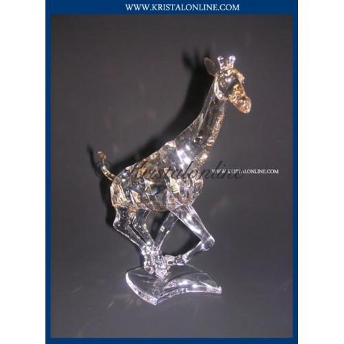 Giraffe 2008