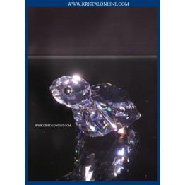 Winwin - Turtle