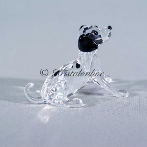 Dalmatian puppy sitting